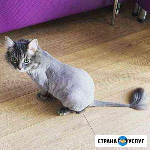 Стрижка кошек и собак Самара
