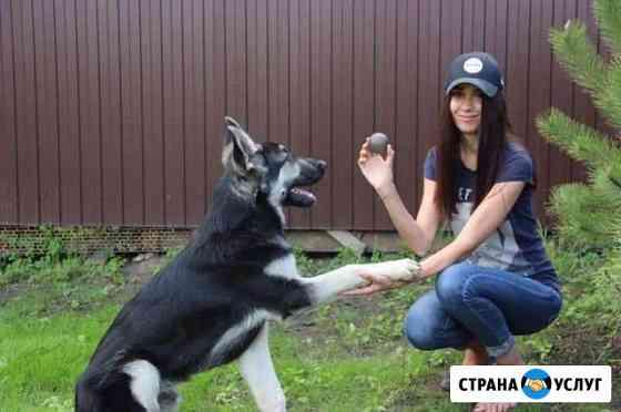 Передержка собак Краснодар