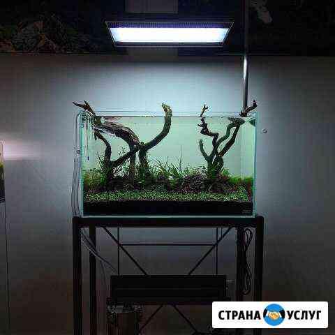 Обслуживание аквариумов Санкт-Петербург