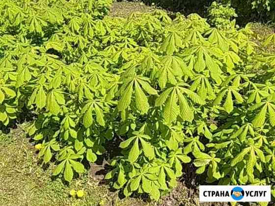 Растения Бор