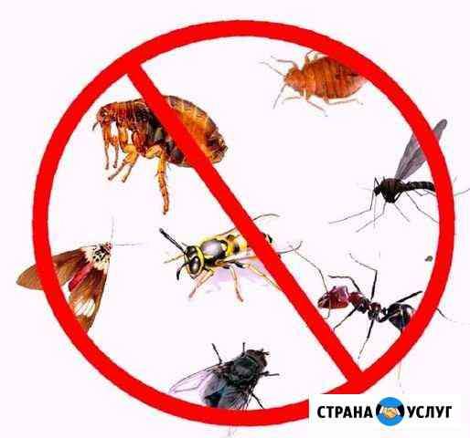 Устранение тараканов, клопов, мышей, блох, крыс Ялта