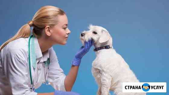 Ветеринарная клиника Барс Казань