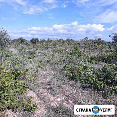 Чистка виноградных полей Севастополь