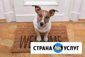 Передержка домашних животных Самара