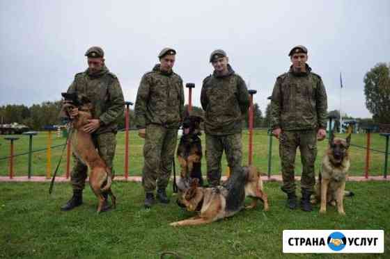 Дрессировка собак Барнаул