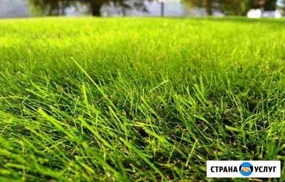 Правильный посев и покос газонов Воронеж