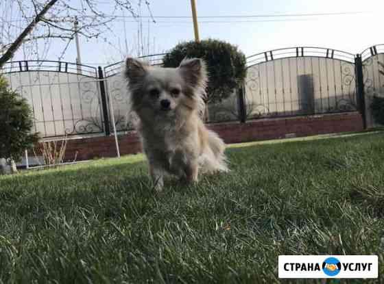 Собаки Новочеркасск