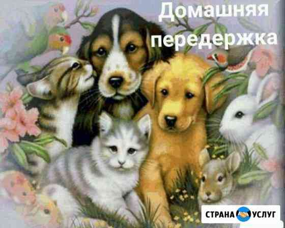 Домашняя передержка животных Сестрорецк