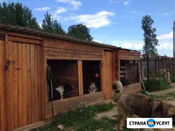 Гостиница для собак Петрозаводск