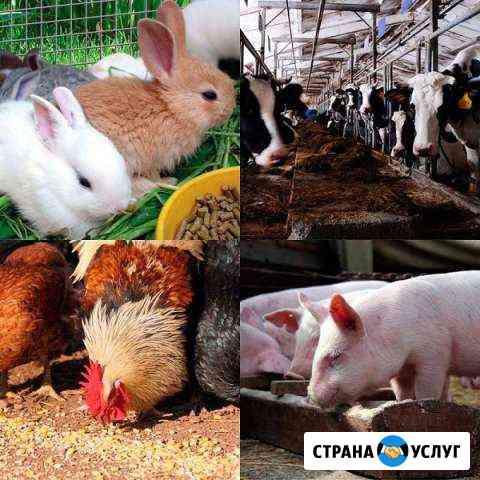 Комбикорма для с/х животных Владимир