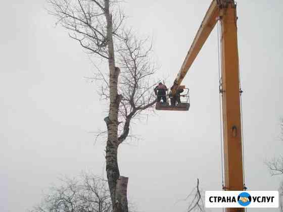 Спил деревьев любой сложности в стеснённых условия Ульяновск
