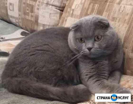 Вислоухий кот. Вязка Брянск