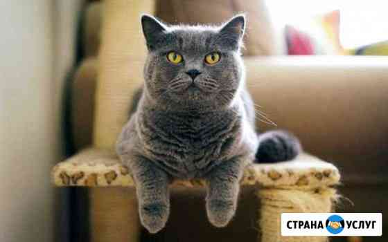 Передержка (зоогостиница) для кошек Новосибирск