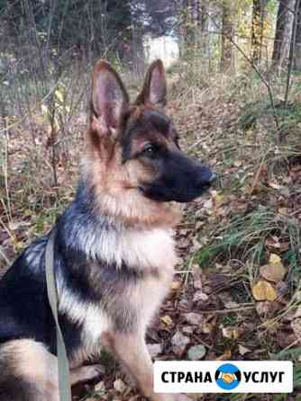 Передержка собак Нижний Новгород