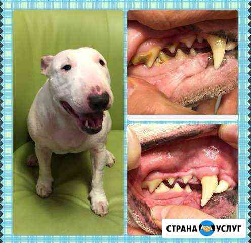 Ультразвуковая чистка зубов собакам без наркоза Самара