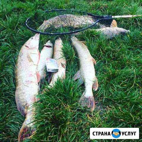 Рыбалка форель, карп, щука Муром
