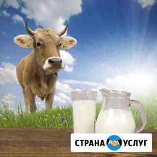 Молоко домашнее коровье Шахты