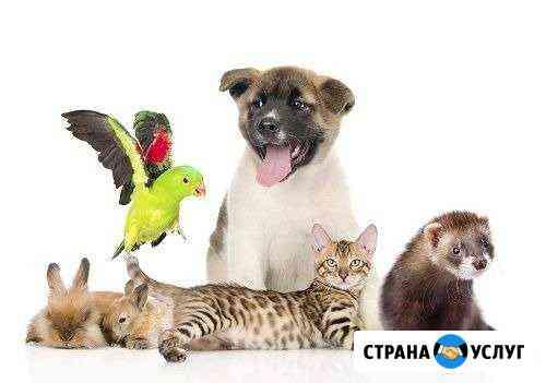 Передержка животных на время отпуска и отъезда Петропавловск-Камчатский