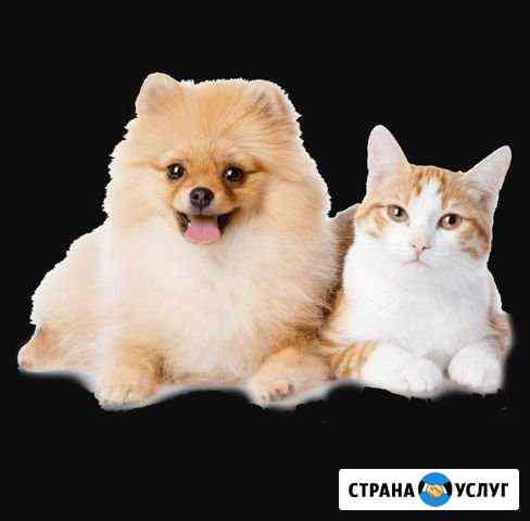 Стрижка котов,собак, чистка зубов Волгодонск