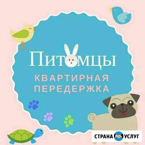 Домашняя передержка с комфортом и лаской Санкт-Петербург