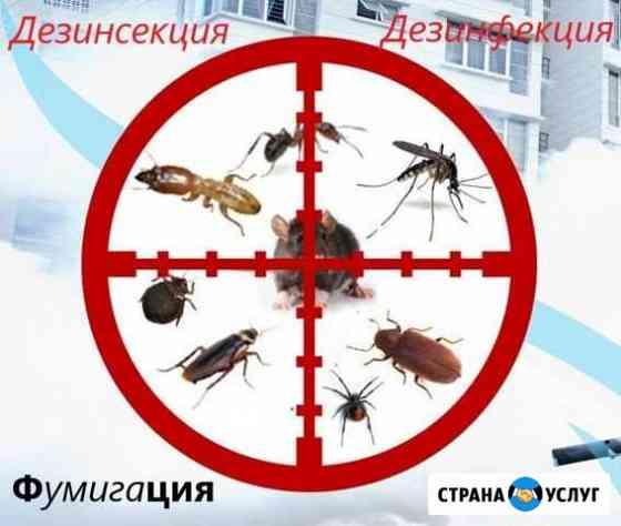 Уничтожение : тараканов, клопов,муравьев, короеда Уфа