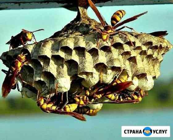Уничтожение насекомых: клопы шершни тараканы клещи Новодвинск
