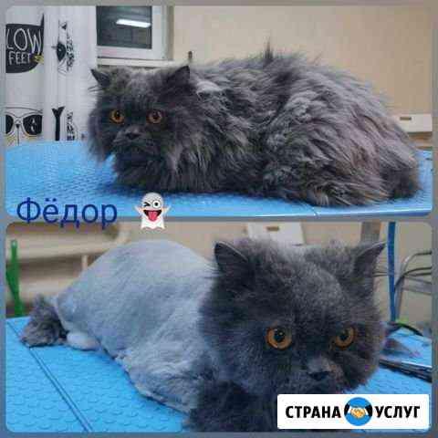 Стрижка кошек опытным грумером Ростов-на-Дону