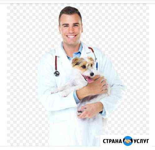 Консультация ветеринарного специалиста Владимир