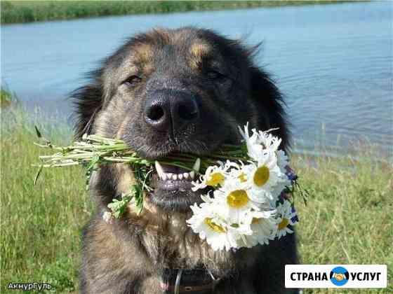 Выгул собак, присмотр во время вашего отъезда Самара