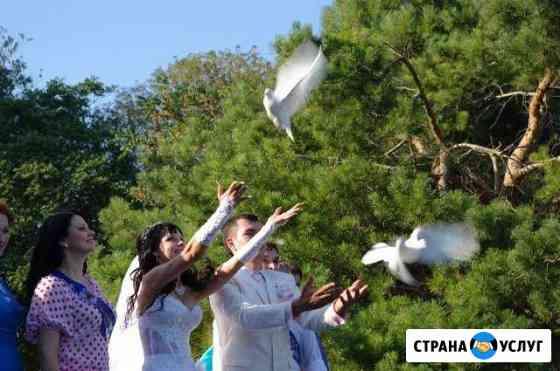 Видеосъёмка и Белые Голуби Таганрог