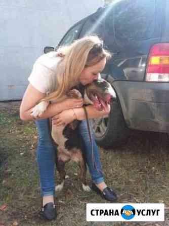 Дрессировка собак Нижний Новгород