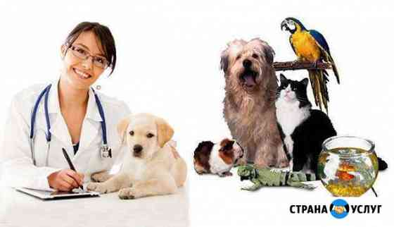 Ветеринарный врач Владимир