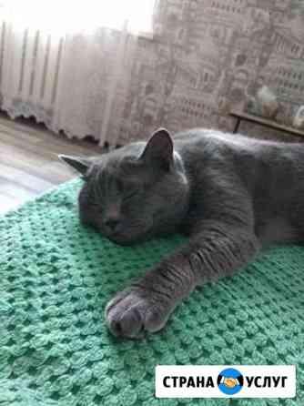 Кошка для вязки Белгород