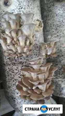 Лузга подсолнечника, выращивание грибов вешанка, у Челябинск