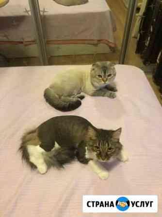 Стрижка кошек и собак Уфа