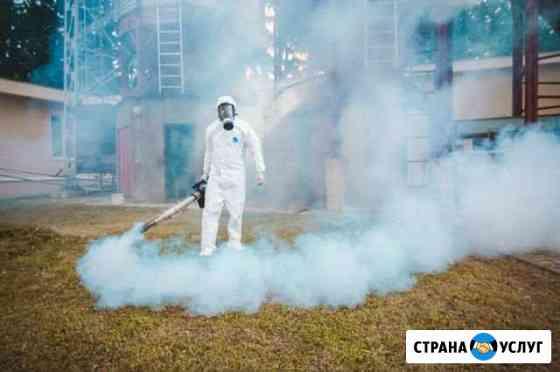 Уничтожение клопов тараканов блох муравьев клещей Архангельск