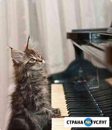 Настройка пианино и роялей Астрахань
