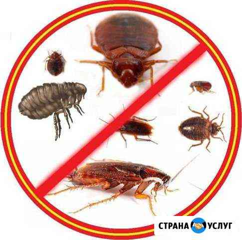 Санобработка тараканов, клопов и Т.д Тольятти