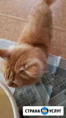 Уход за котами Иваново