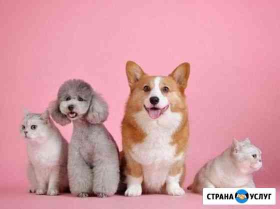 Выгул собак и кошек Екатеринбург