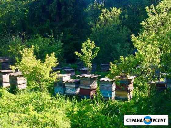 Услуги по пчеловодству Тула