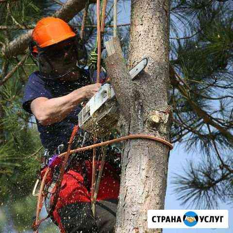 Спил деревьев Элиста
