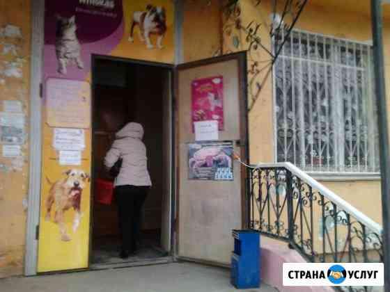 Ветеринарные услуги Астрахань