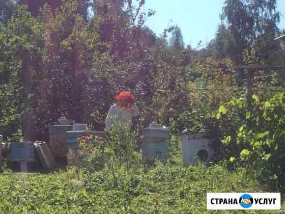 Продам мёд со своей пасеки Саяногорск