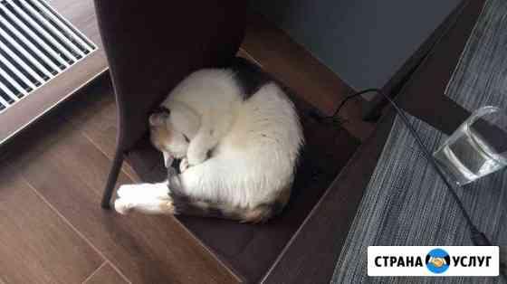 Передержка кошки Екатеринбург