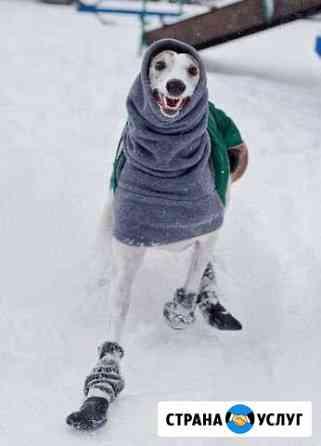 Выгул ваших собак Шахты