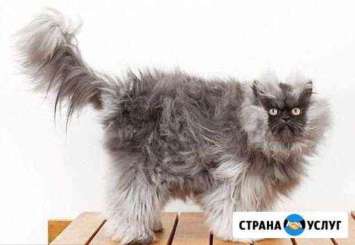 Вызов на дом. Ветеринарные услуги Пермь