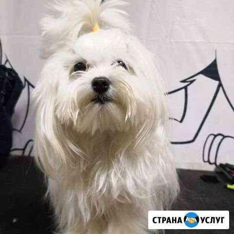 Стрижка собак и кошек Красноярск