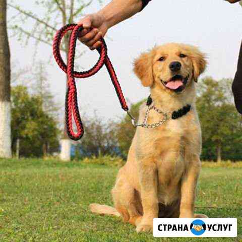 Погуляю с вашей собакой Курск