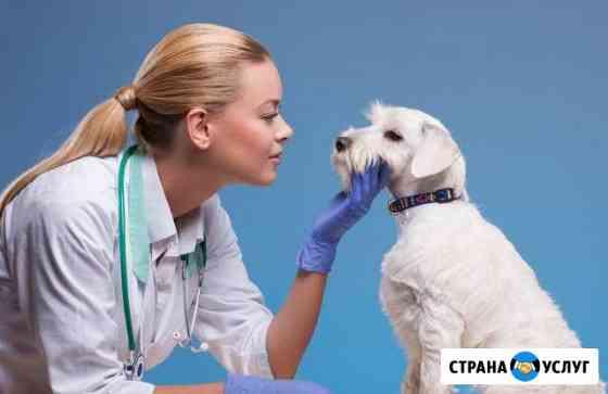 Опытный ветеринар Тольятти